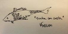Trucha con cresta, por Ángel Luis Tendero Martín
