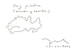 Pez Piedra, por Ángel Borrego