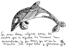 Orca Kardashiana, por TER